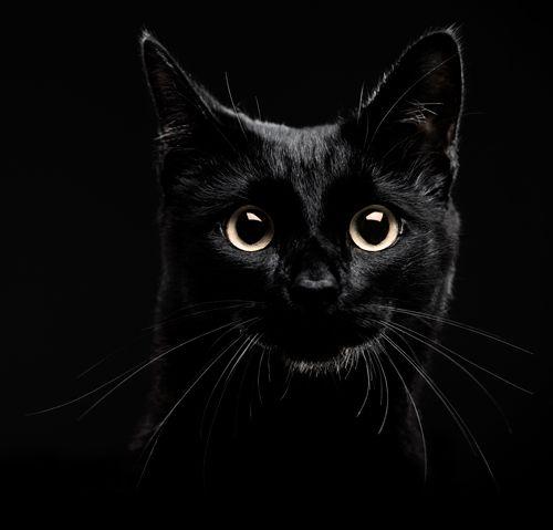 black cats - Cerca con Google