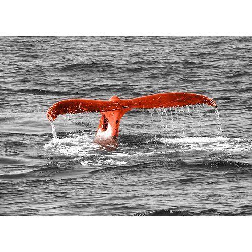 Glasbild Animals Whale Tail Fotodruck In Orange East Urban Home