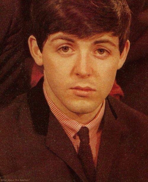 Beatles Those Beautiful Hazel Eyes Puppy Dog