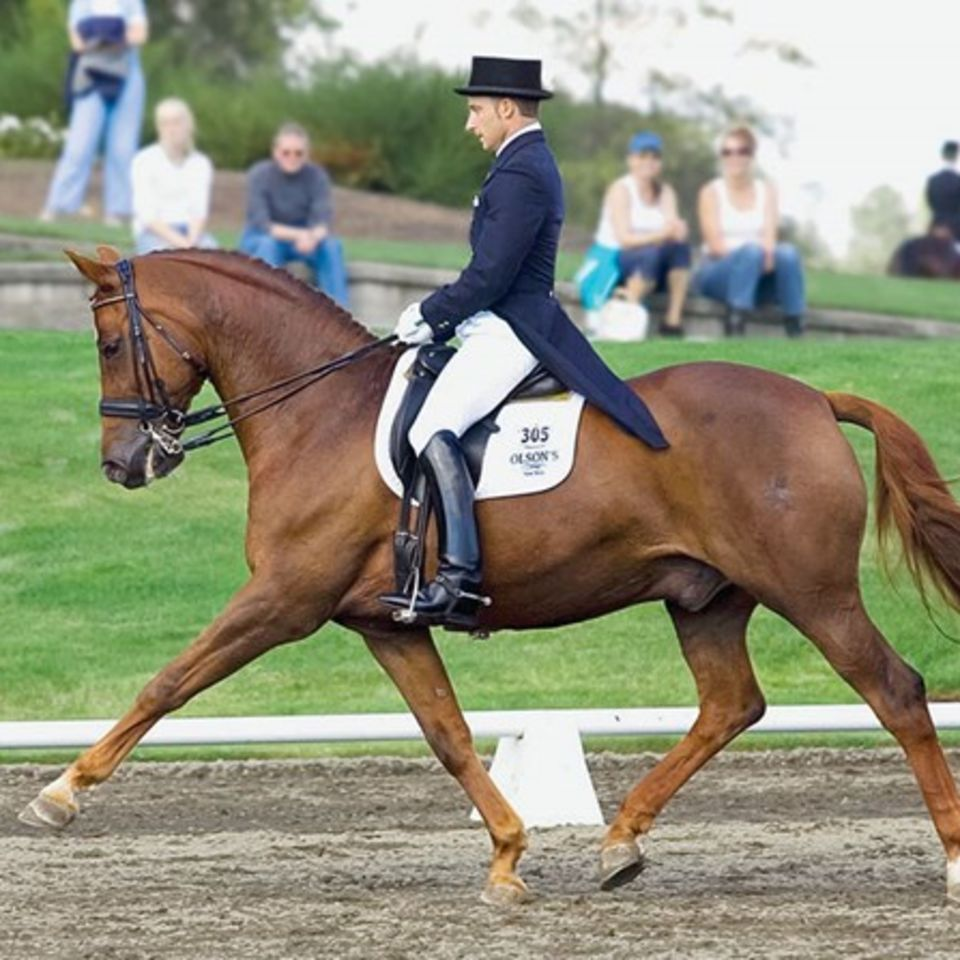 what to look for in a dressage horse