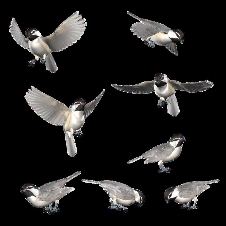 Mountain Chickadee 02 by BrokenWing3dStock   Birds ... - photo#11