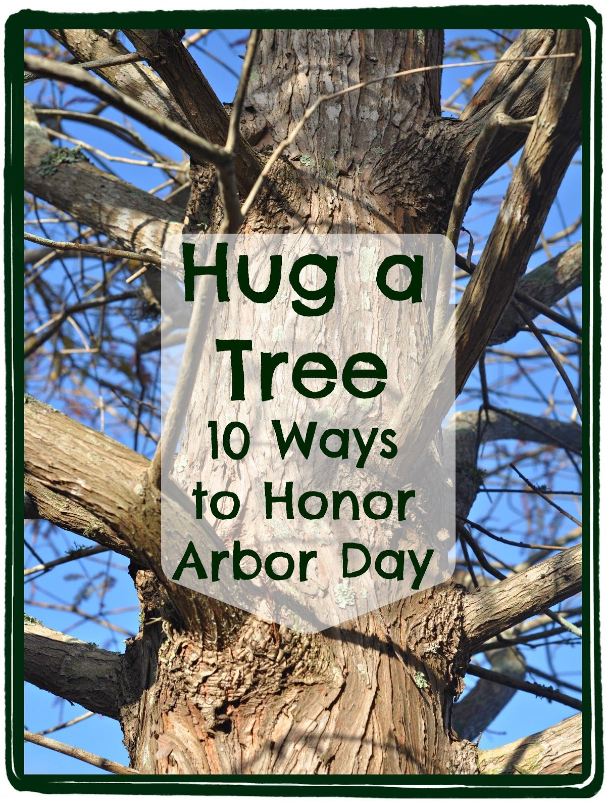 It's National Arbor Day, a special day set aside for tree