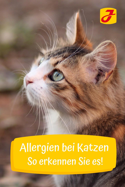 Pin Auf Katzen Gesundheit