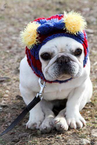 Squeeeeee Cute Animals Bulldog Beautiful Puppy