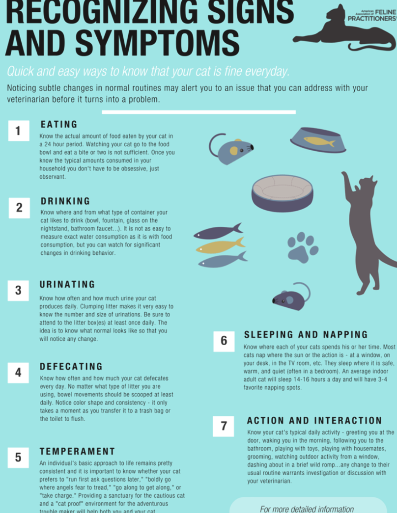 Signs And Symptoms American Association Of Feline Practitioners In 2020 Cat Care Tips Cat Care Kitten Care