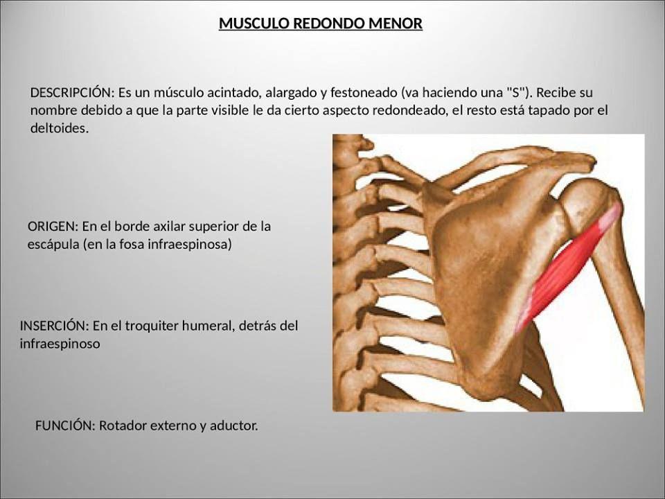 Increíble Fosa Definición Anatomía Colección - Anatomía de Las ...
