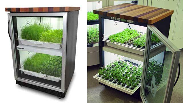 Organikus növénytermesztés