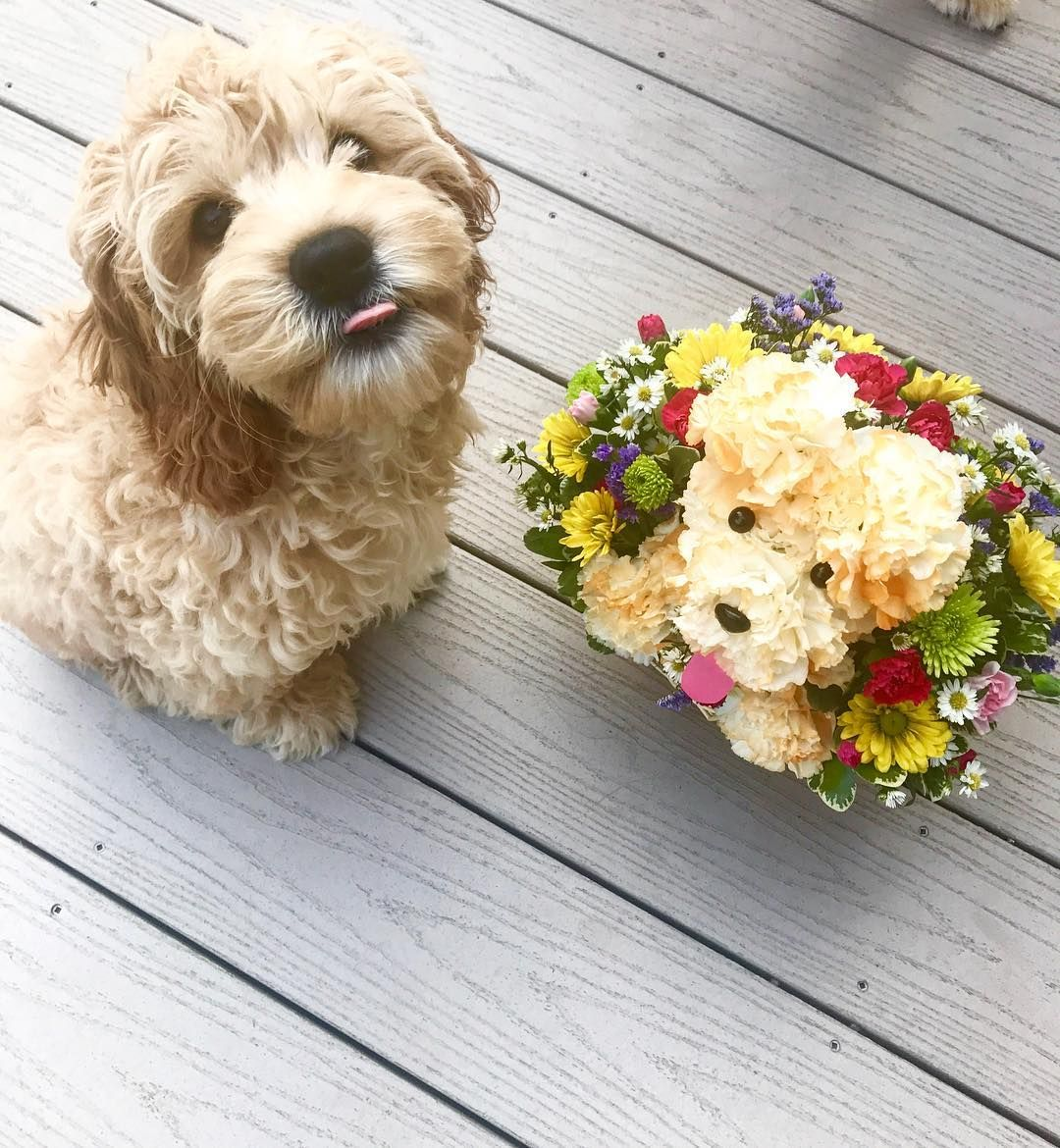 TonguesOut if you have an adogable flower twin! Buy