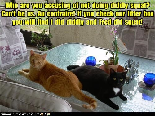 Who are you accusing of not doing diddly squat? Can't be us. Au contraire! If you check our litter box you'll find I did diddly and Fred did squat!