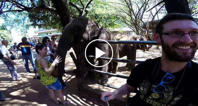 Este Elefante Não Deve Gostar De Selfies