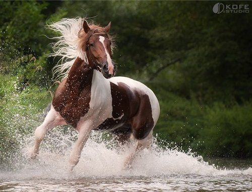 Pretty horse in water