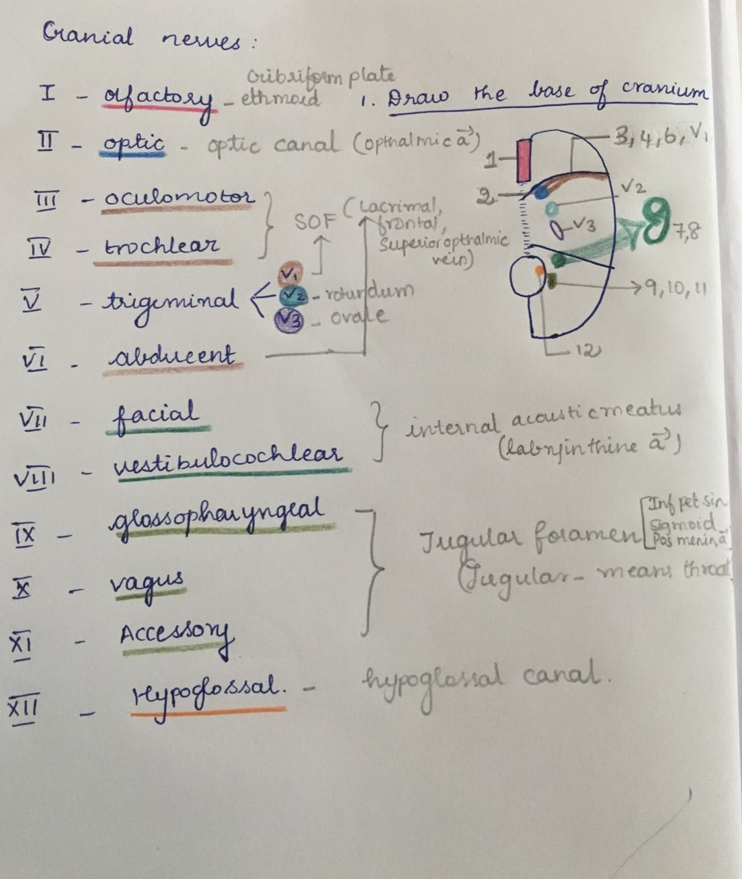 cranial nerve foramen mnemonic - Google Search | Cranial ...