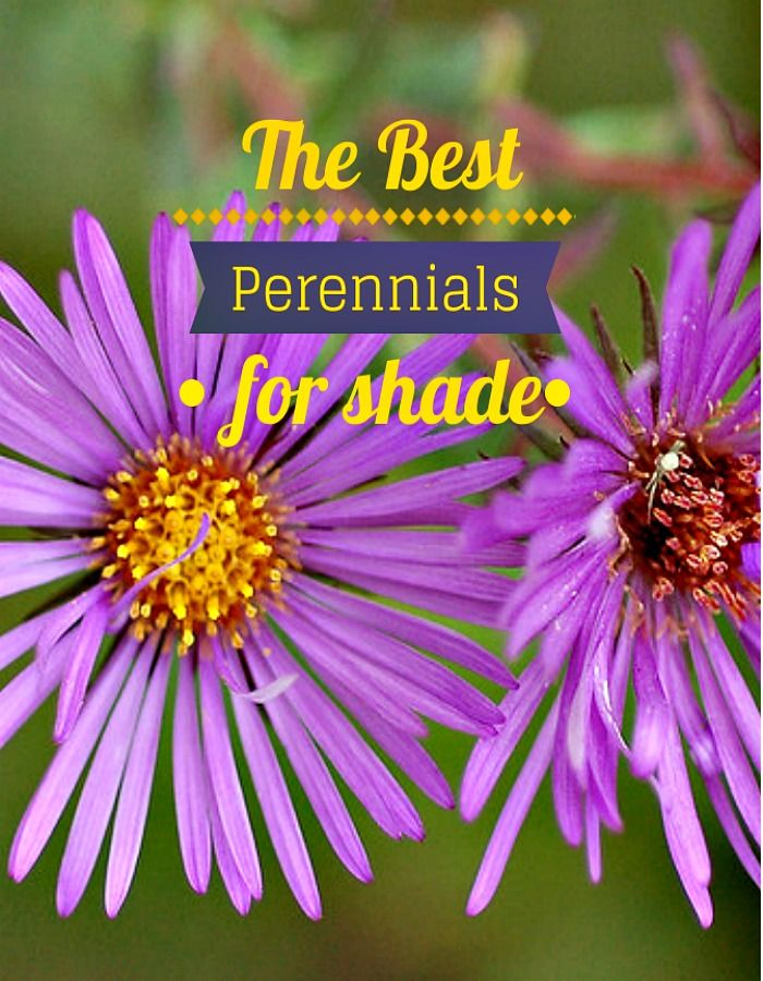 The Best Perennials For Shade Perennials Gardens And Plants