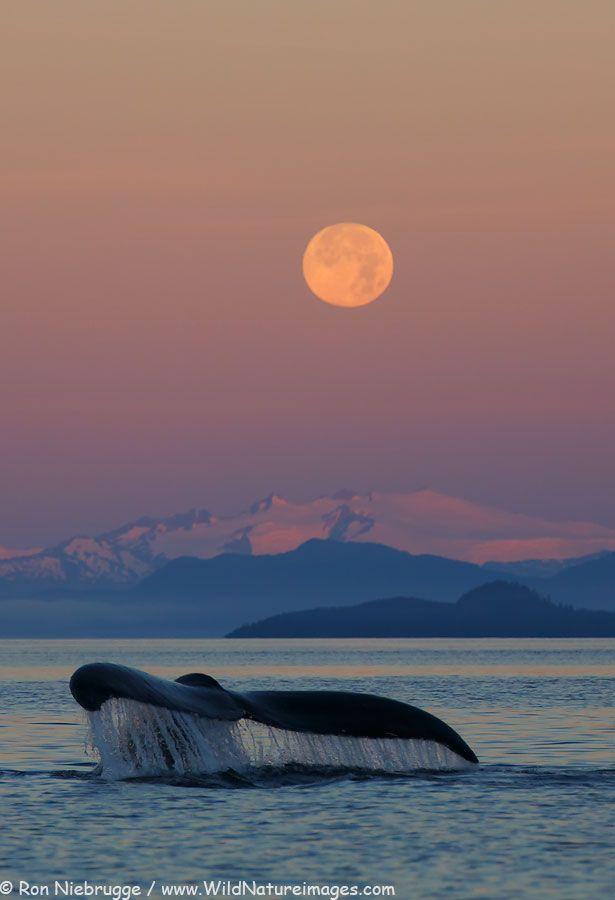 La Gracia y la ballena