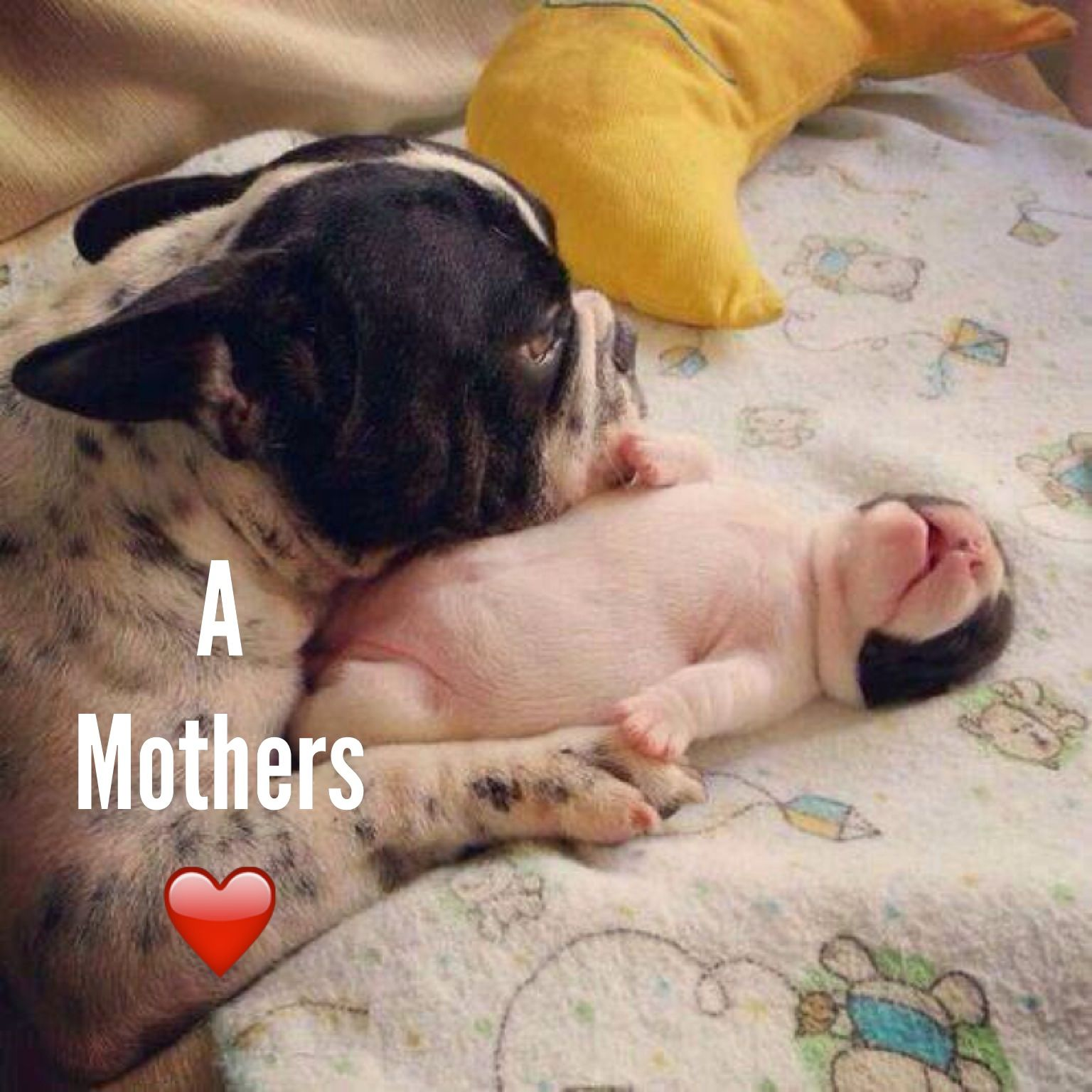 Diego S French Bulldog Athens Greece Baby Dogs Cute Dogs Dogs