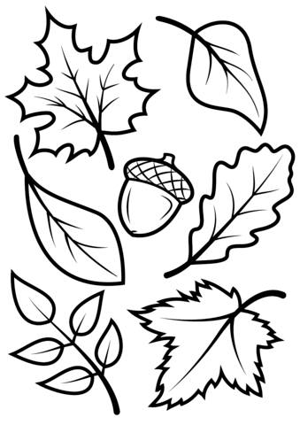 Fall leaves and acorn coloring page from fall category for Coloring pages autumn leaves