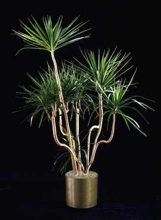 Find The Right Office Plant With Our Plant Brochure Plant Design