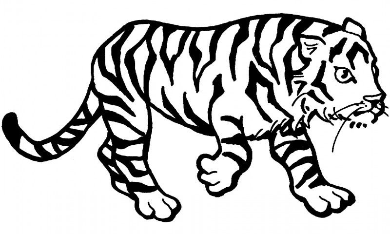 Dibujos De Tigres Para Colorear Tigre Para Colorear Dibujo
