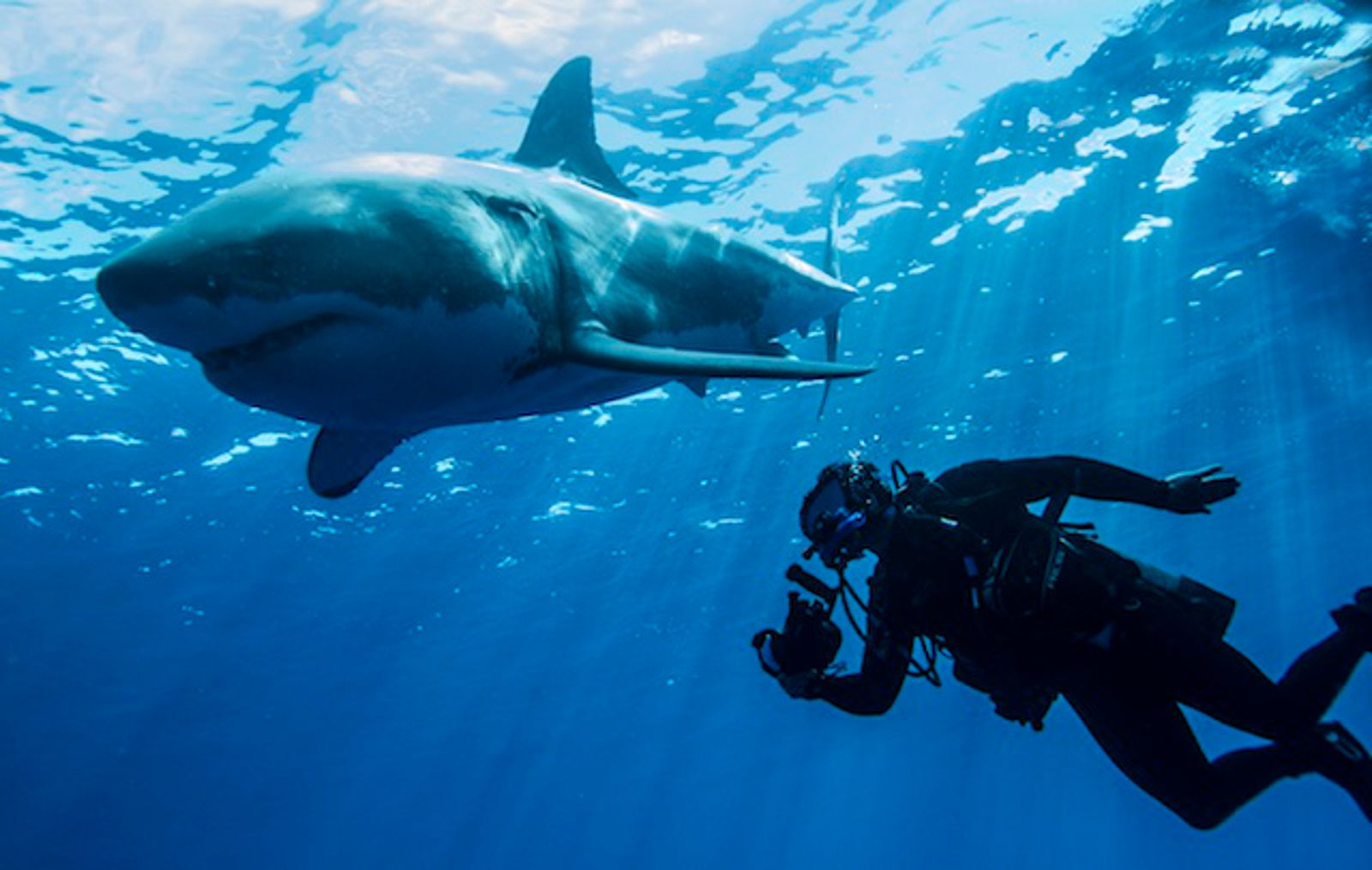 8 Times Humans Interacted With Sharks and Something Beautiful Happened