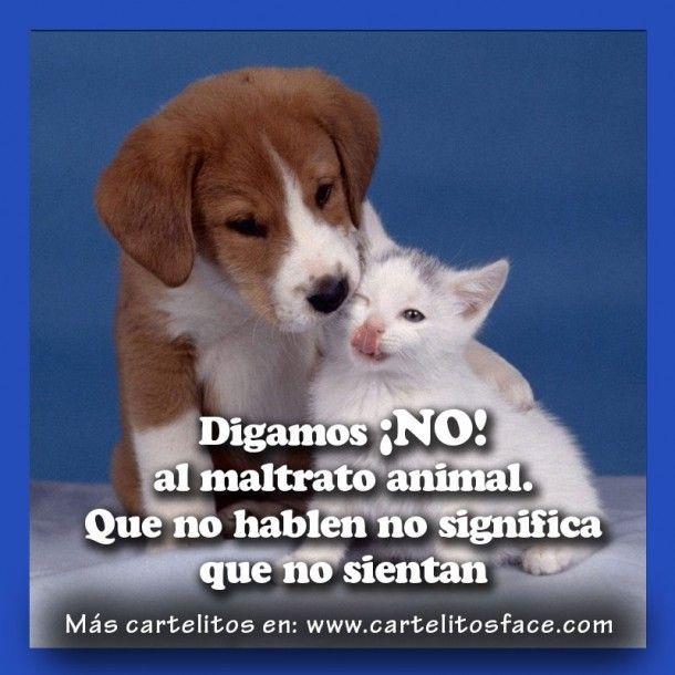 Digamos No Al Maltrato Animal Animales Frases Perros