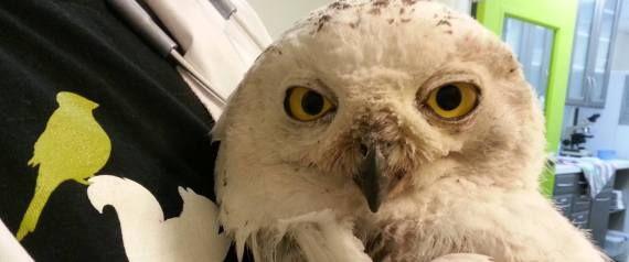 Owl Sees Owl PDF Free Download