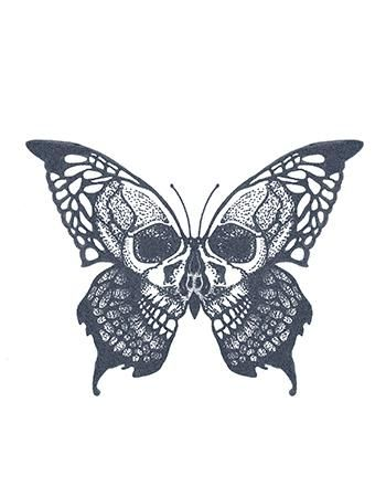 Photo of Skull Butterfly