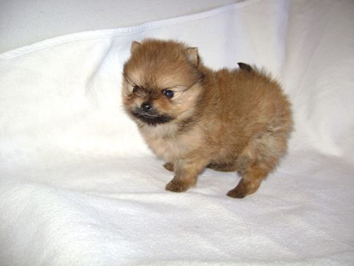 4 Weeks Puppies Your Dog