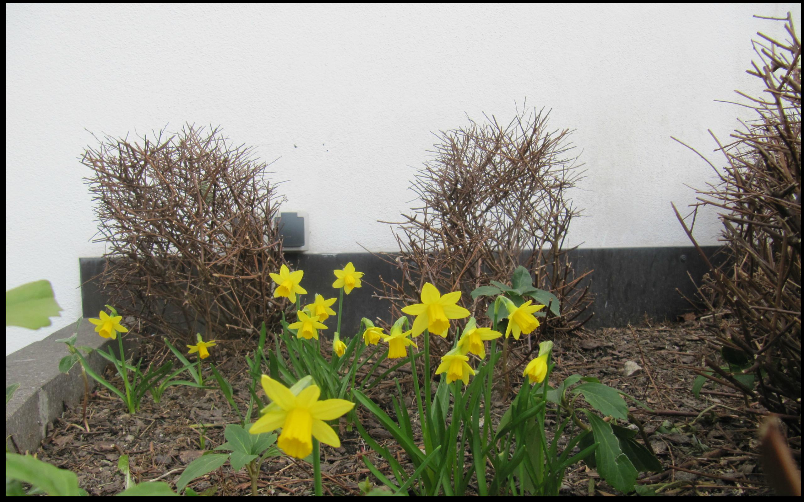 #frühlingsbeginn #garberhof #endlichfrühling #sonne