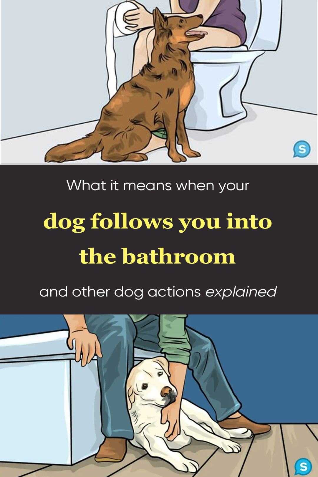 What It Means When Your Dog Follows You Into The Bathroom And Other Dog Actions Explained In 2020 Your Dog Funny Humor