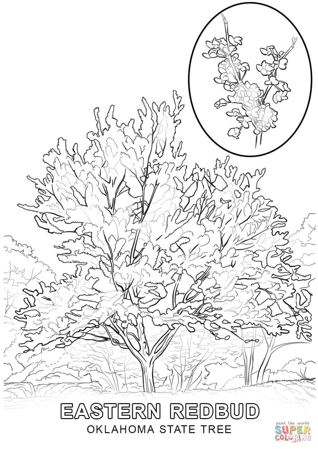 Click The Oklahoma State Tree Coloring Pages To View Printable