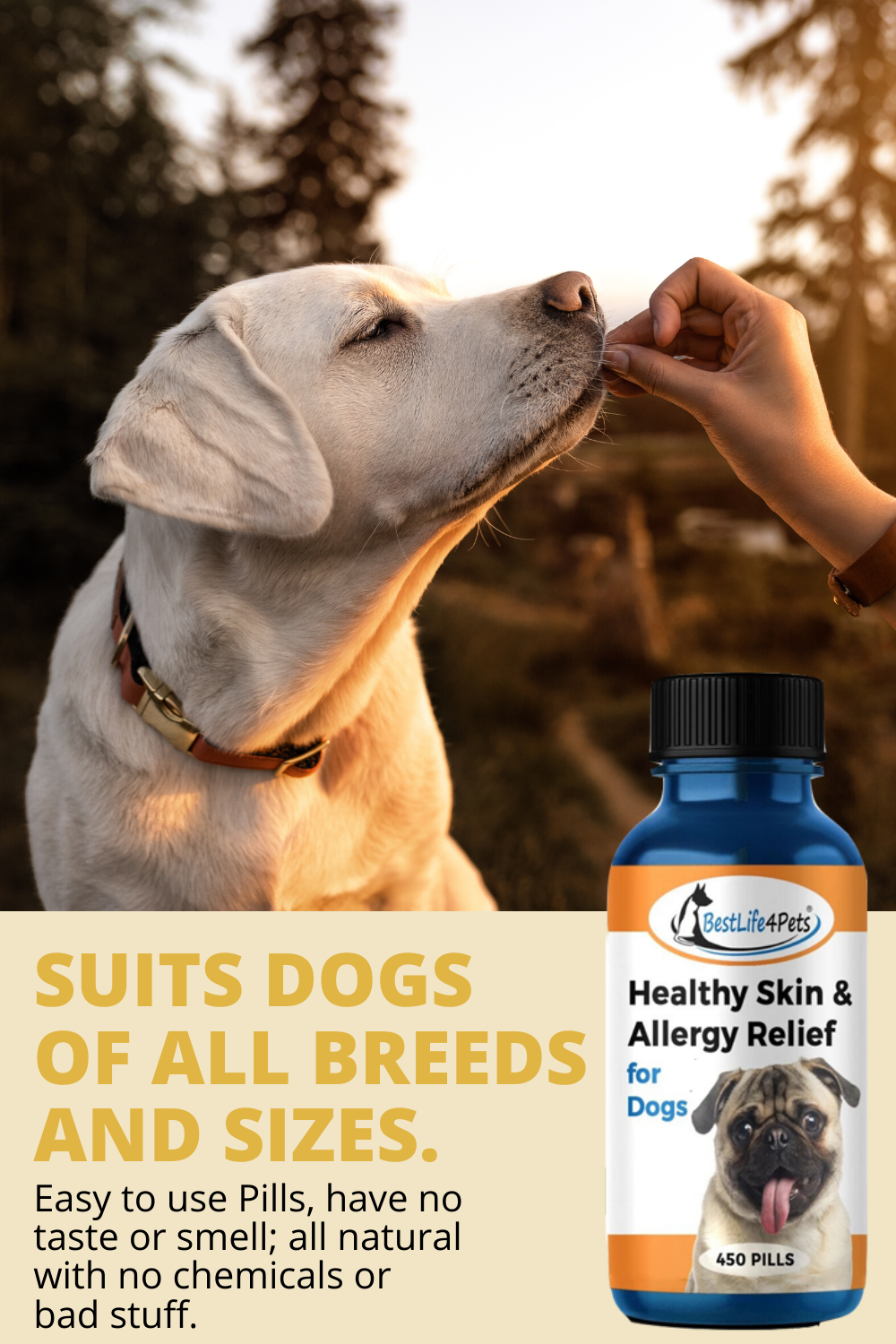Dog Itch Remedy in 2020 Dry patchy skin, Patchy skin