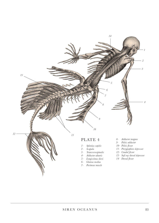 Siren Oceanus (Plate 4.) | Надо попробовать | Pinterest | Sirens