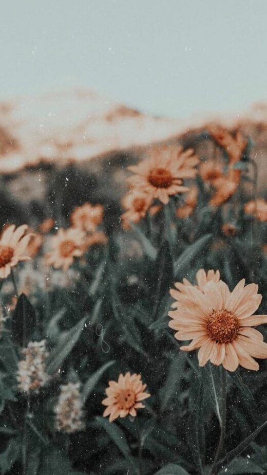 50 Sunflower Wallpapers That Will Warm Your Heart