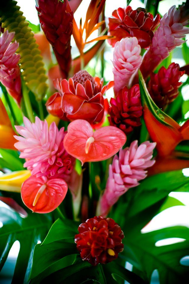 Anthurium, Proteus and Ginger... Hawaiian bouquets by Hala Tropical ...