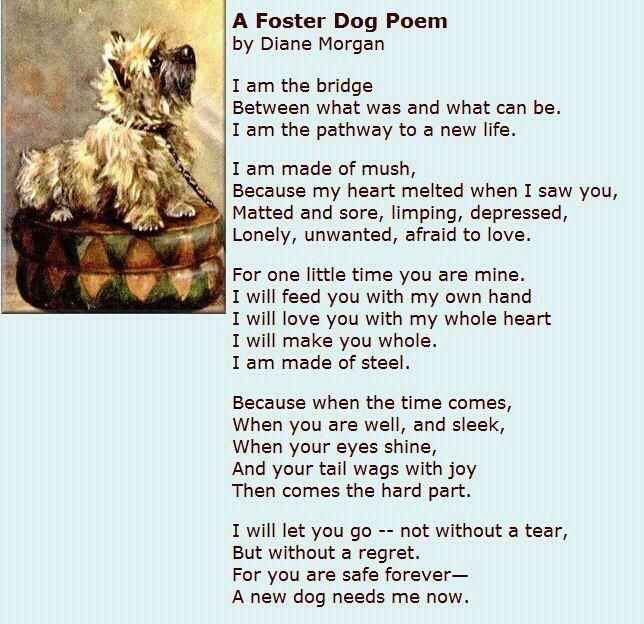 Pin By Obg Cocker Rescue On Everyone Can Do Something Foster Dog Dog Poems The Fosters