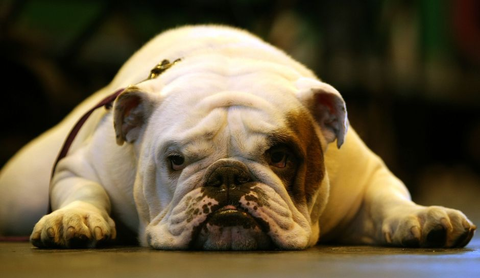 Brothers Who Threw Family Bulldog Down Stairs Forced To Flee Mob