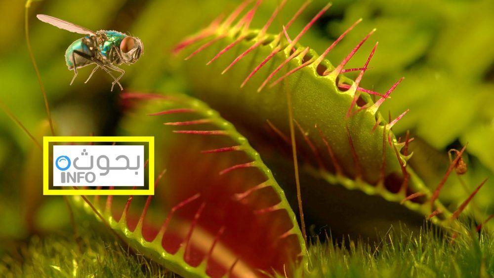 النباتات المفترسة آكلة الحشرات Christmas Ornaments Holiday Decor Holiday