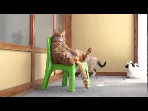 Наглый рыжий кот сидит на маленьком стуле
