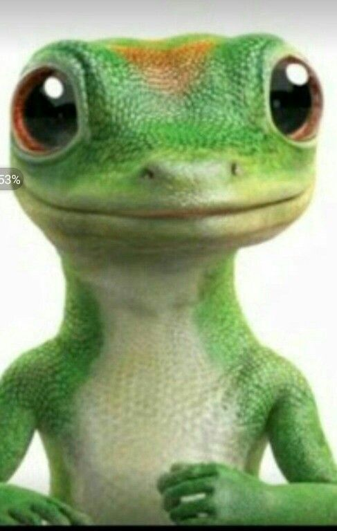 Pin on GEICO INSURANCE SCAMS?