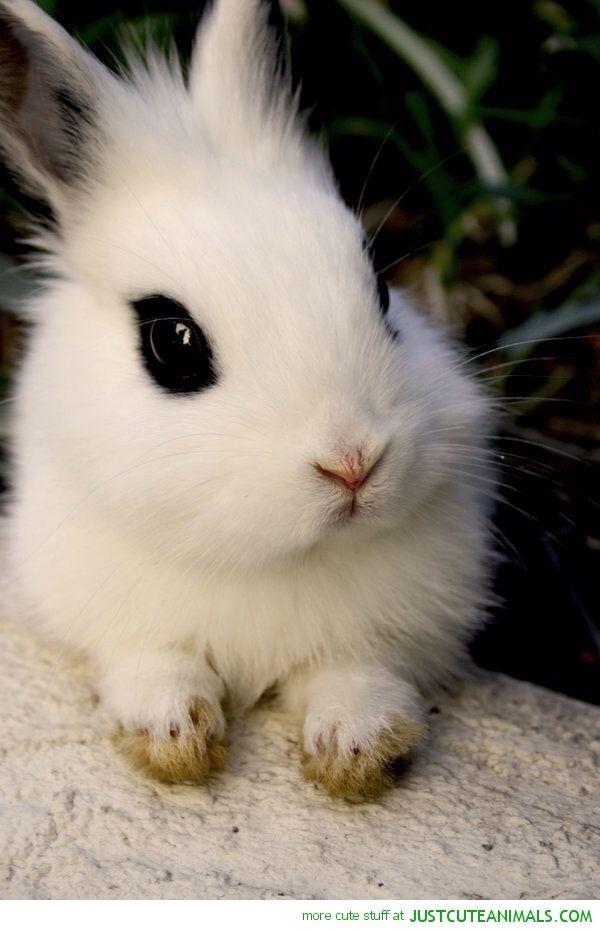 White Bunny Rabbit Cute Animals Cute Baby Animals Animals Beautiful