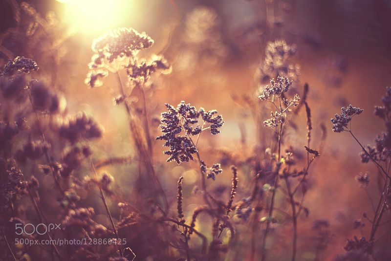 ... by BarbaraFlorczyk #nature