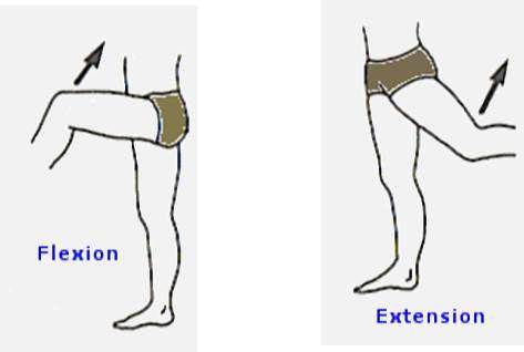 Flexión y Extensión de cualquier parte del cuerpo | Anatomía Humana ...