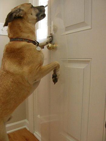 Dog Door Protector For My Pretty Pitties Pinterest Dogs Doors