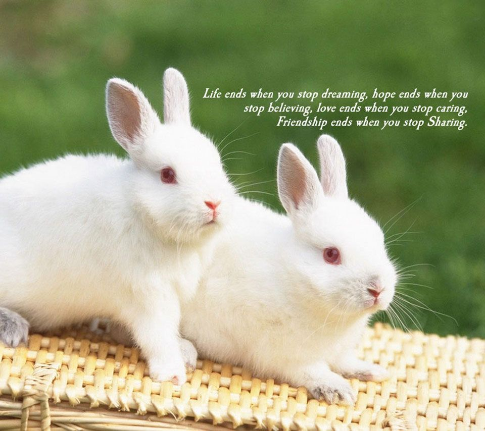 cute bunny quotes sayings