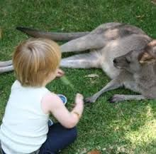 Feeding the animals at Lone Pine Koala Sanctuary in Brisbane #Brisbane #Queensland
