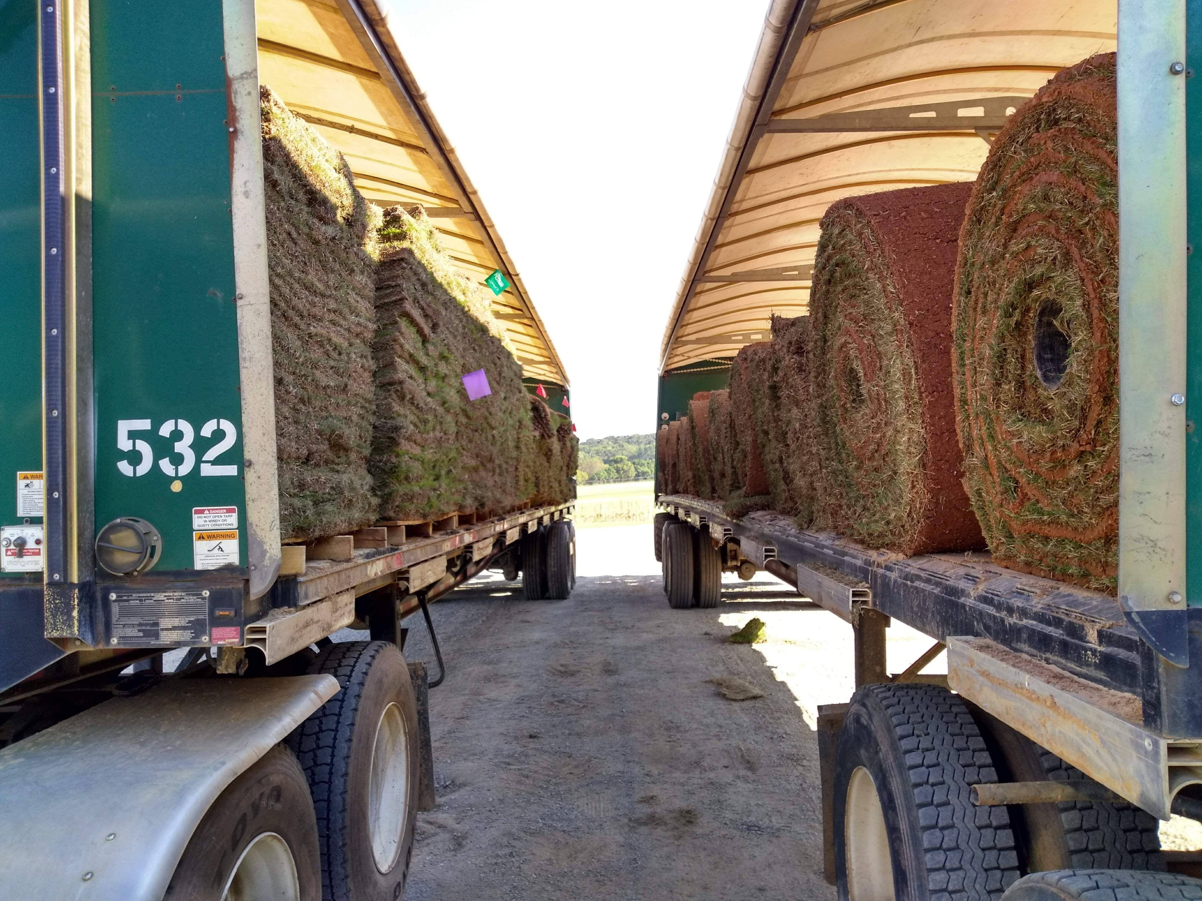 We harvest our farm fresh sod by the mega roll and by the pallet so