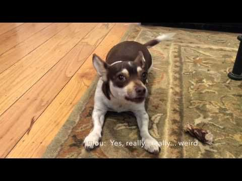 Lilou Barkdown - YouTube