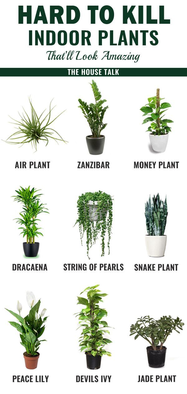 Photo of Hard To Kill Indoor Plants That'll Look Amazing In Your Home