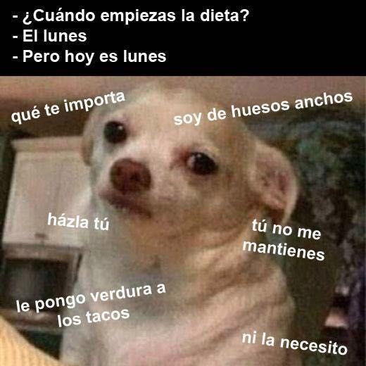 Memes Perro Chihuahua Enojado Google Search Memes Divertidos Memes Memes Perros