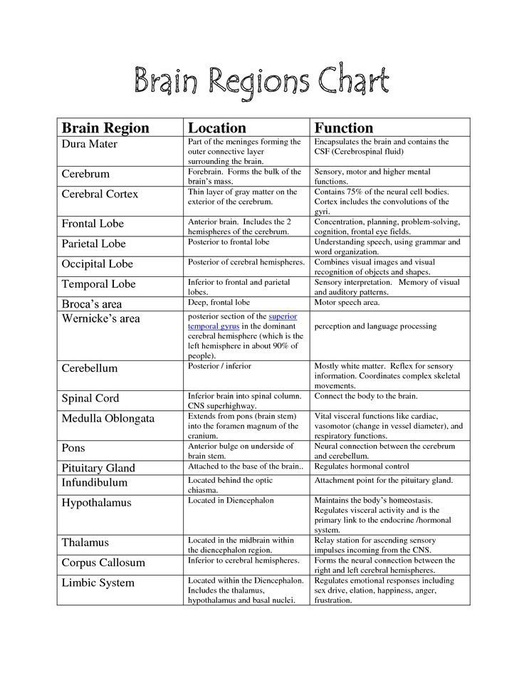 Brain Functions Chart Parts